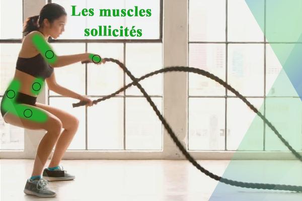les muscles sollicités pendant l'exercice de la corde ondulatoire