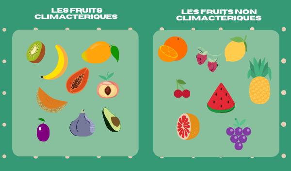 combinaison de fruits